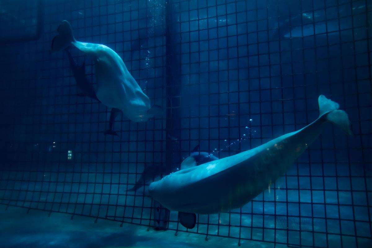 Обитатели глубоководных горизонтов, которые содержатся в Москвариуме, отличаются более бледноым цветом покровов, нежели мелководные собратья.