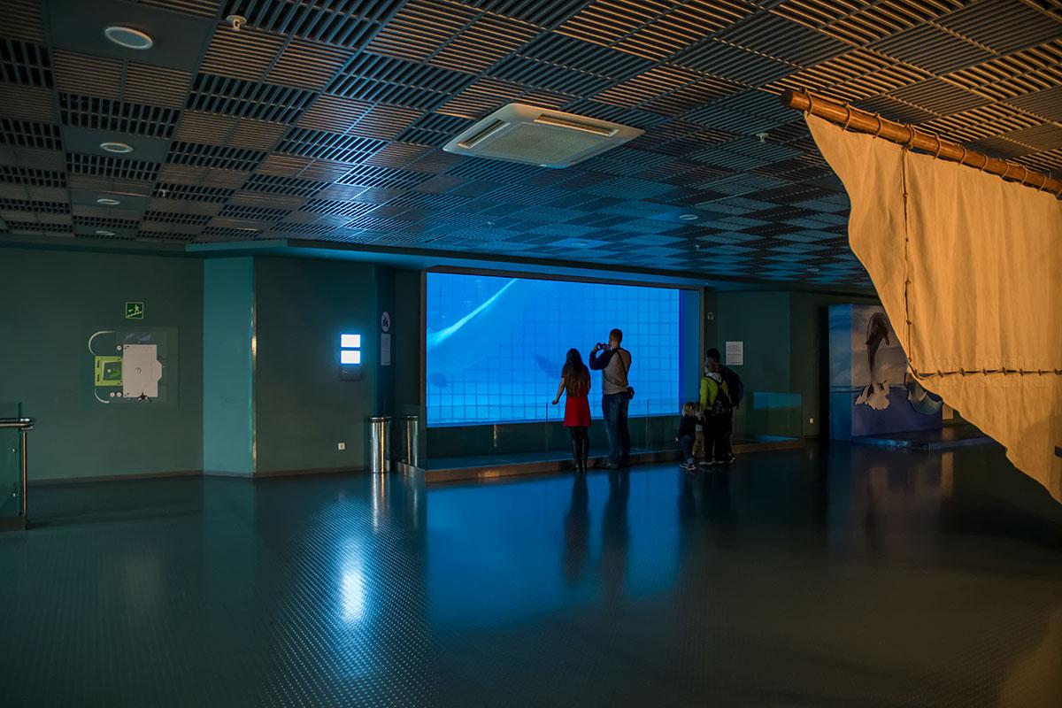 Самые крупные демонстрационные емкости Москвариума располагаются в просторном зале, напоминающем кинотеатр без рядов зрительских мест.