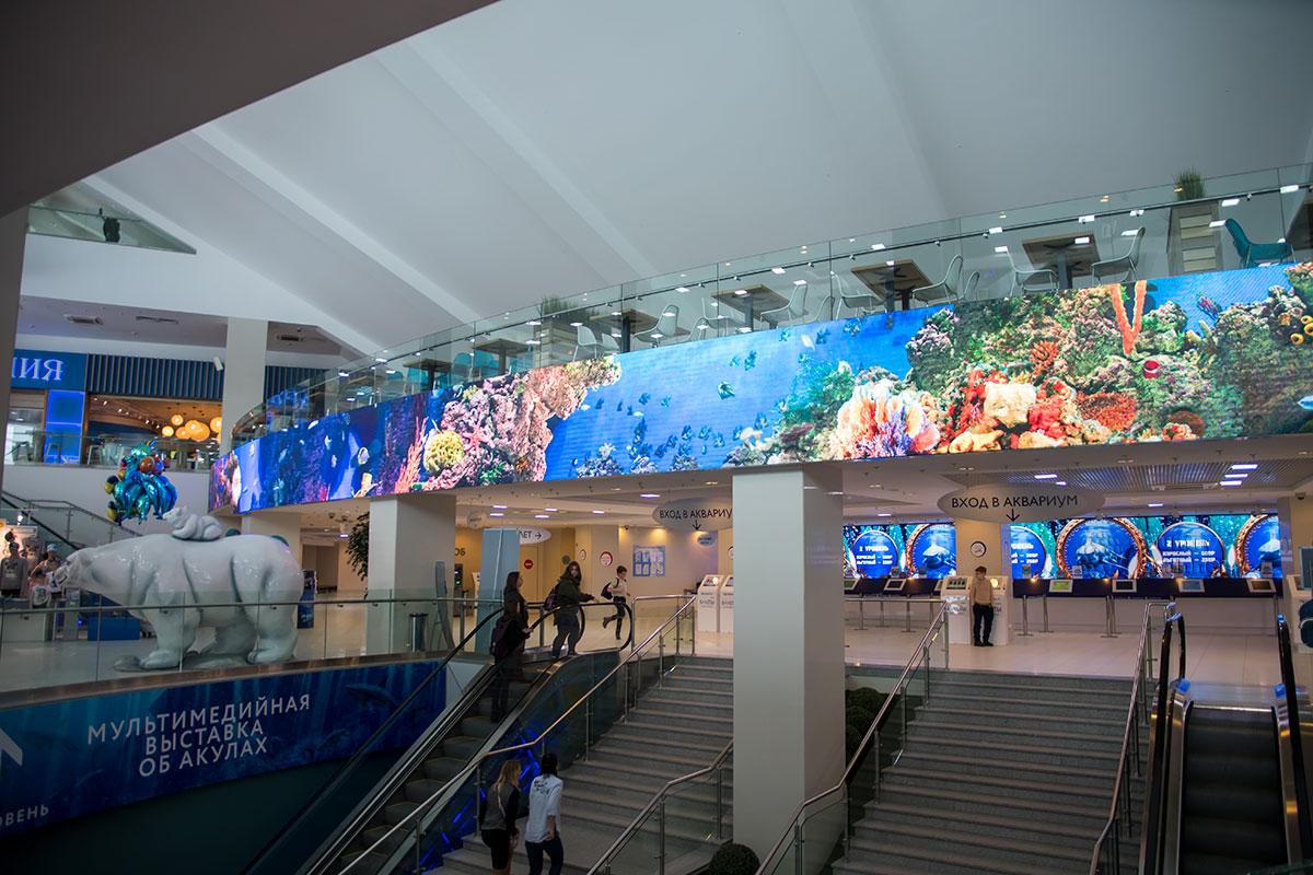 Расположенный в необычного дизайна большом здании, Москвариум встречает посетителей яркими картинами подводного мира.