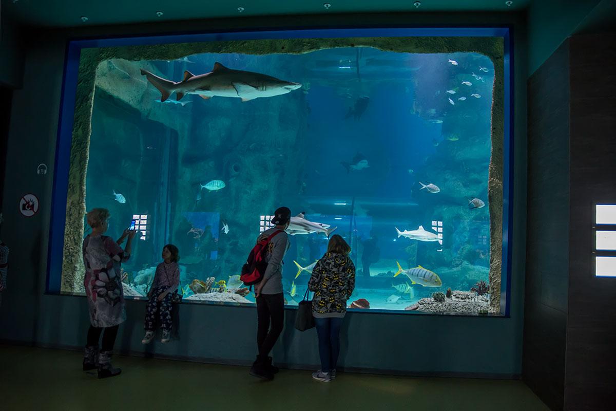 Москвариум демонстрирует своим посетителям и довольно крупных представителей морской фауны, в том числе несколько видов зубастых акул.