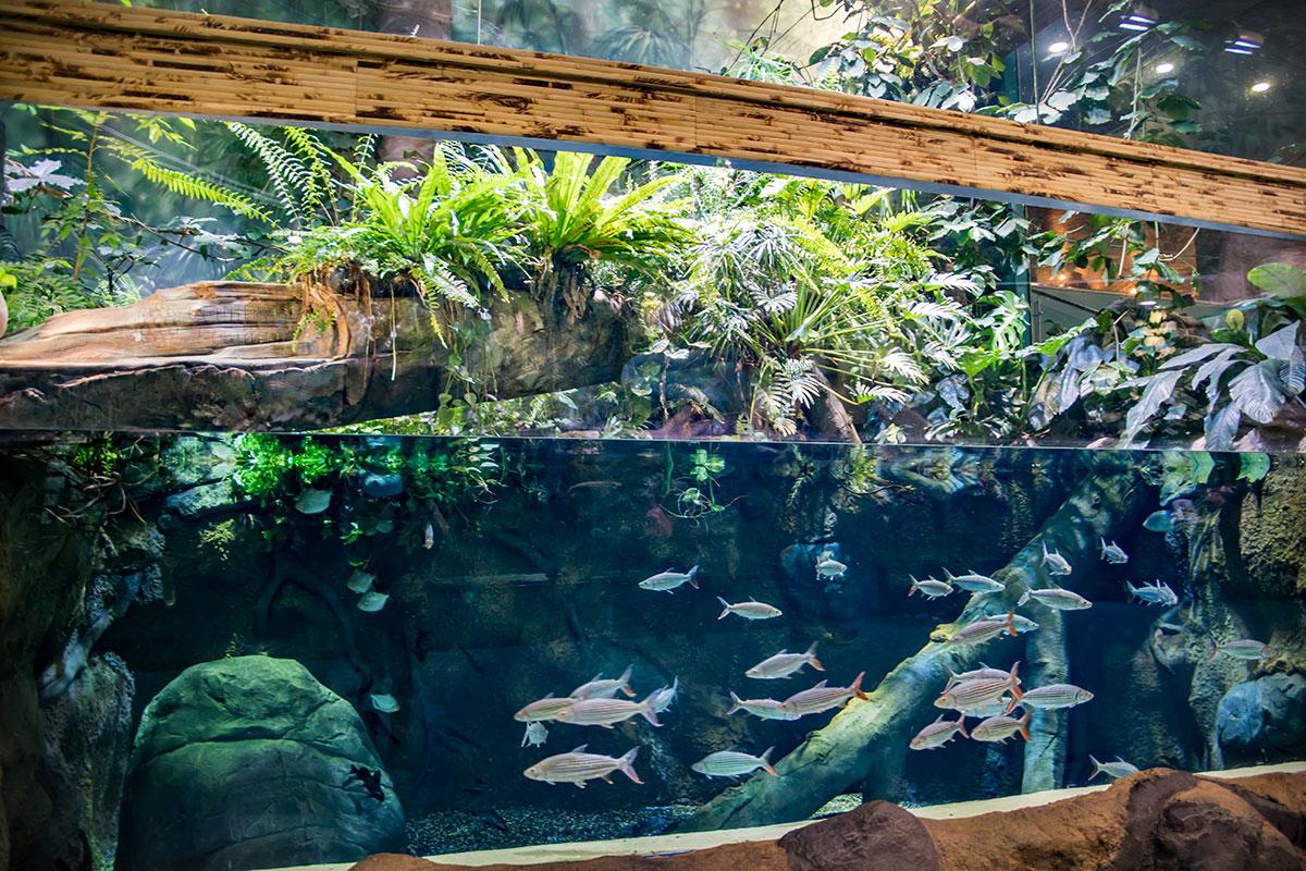 Многие образцы подводных и частично сухопутных интерьеров Москвариума могут служить образцом для любителей аквариумистики.