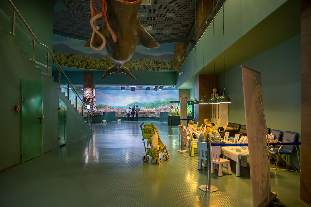 Москвариум не только демонстрирует подводных обитателей, это еще и крупный просветительский центр этой тематики.