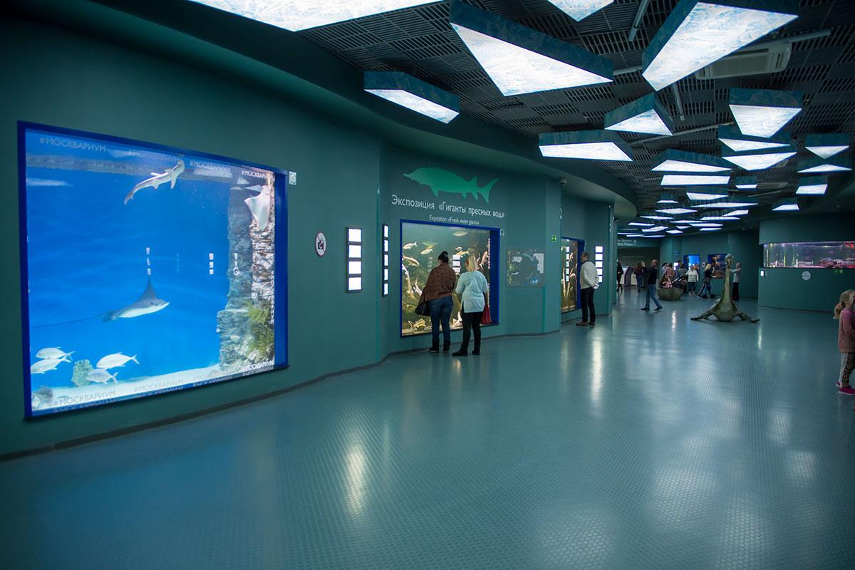Полутень выставочных залов Москвариума подчеркивает живописность демонстрируемых подводных ландшафтов и их разнообразных обитателей.