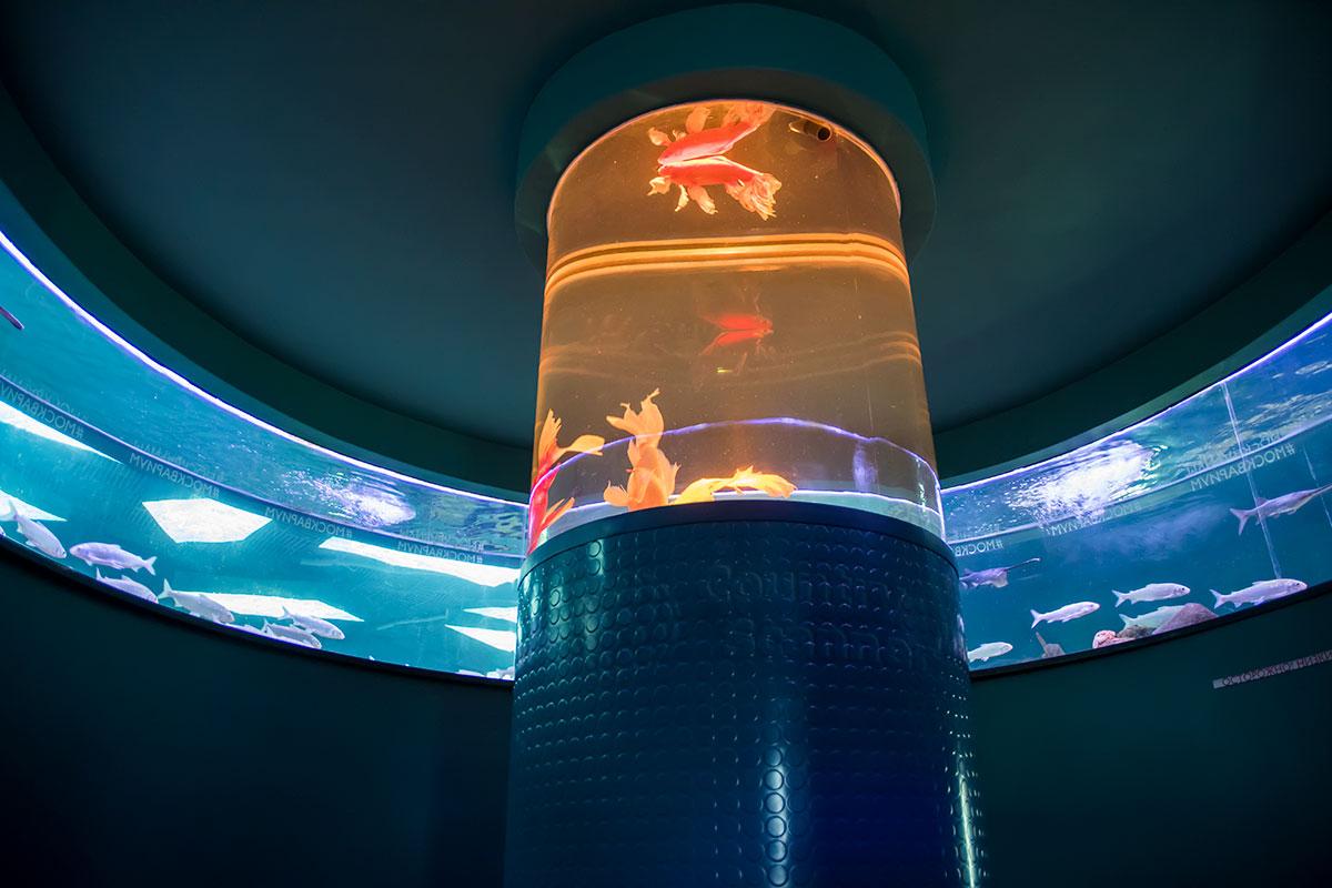 Необычно устроен один из аквариумов, образующий круговую панораму подводного мира, в центре Москвариум поместил еще один сосуд, в виде колонны.