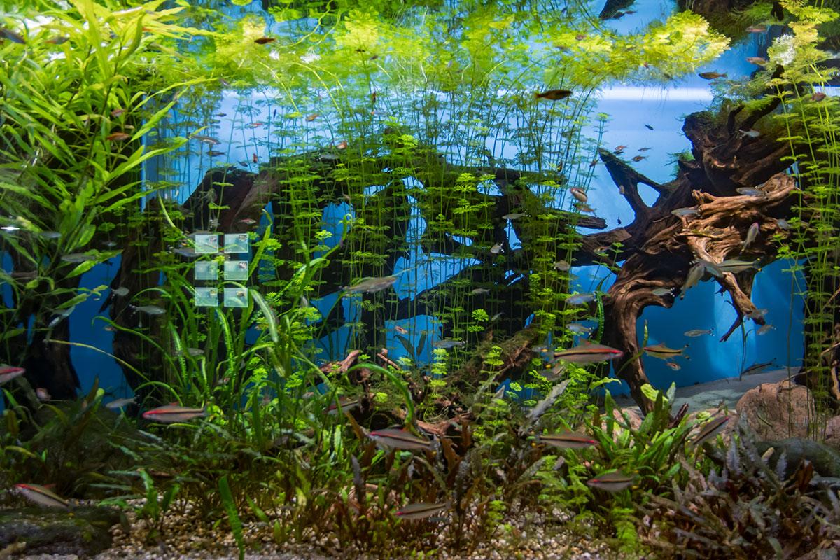 Искусное и разнообразное оформление выставочных сосудов в Москвариуме являет образец для подражания заводящим домашние аквариумы.