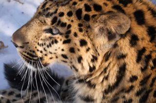 news3 6-06-2018 Земля леопарда