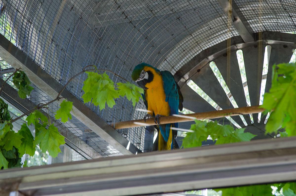 Ара сине-желтый, один из обитателей восточного вольера Петергофа. В природных условиях живет в Южной Америке.