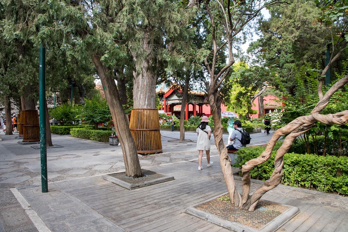 Своеобразие Императорского сада в Запретном городе в предпочтительном размещении кривых и разнообразно изогнутых деревьях, подчас искусственно.