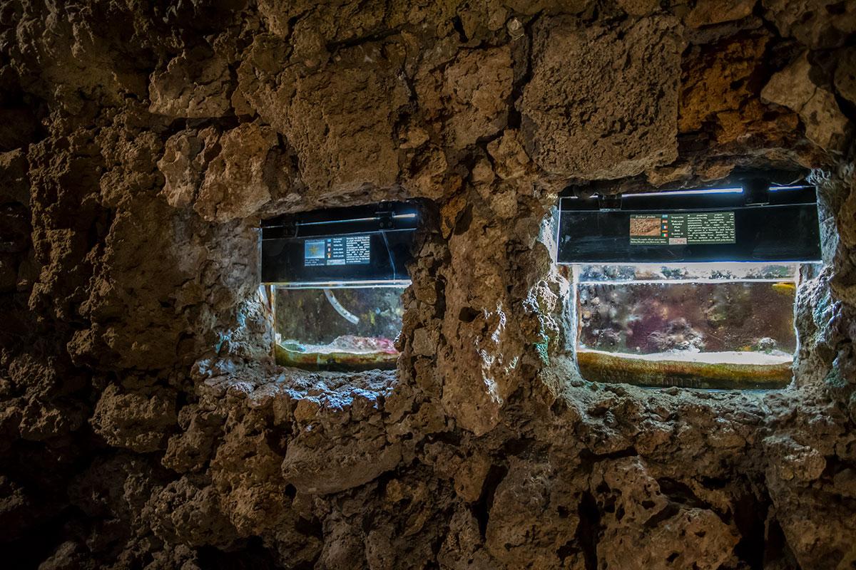 Смотровые отверстия в емкости для морских обитателей в аквариуме Родоса рекордно маленькие, посетители вынуждены приближаться к ним вплотную.