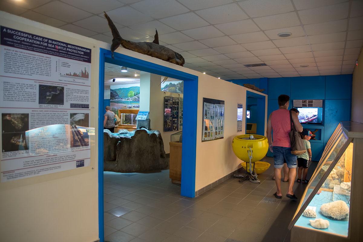 Музейную экспозицию аквариум Родоса расположил в нескольких помещениях, начиная с коридора и вестибюля.