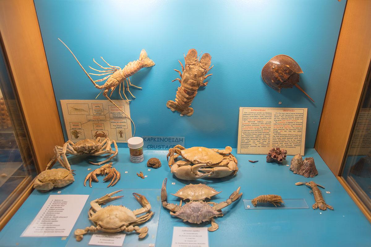 Аквариум Родоса в музейной экспозиции демонстрирует хитиновые панцири членистоногих обитателей Средиземного и других морей.