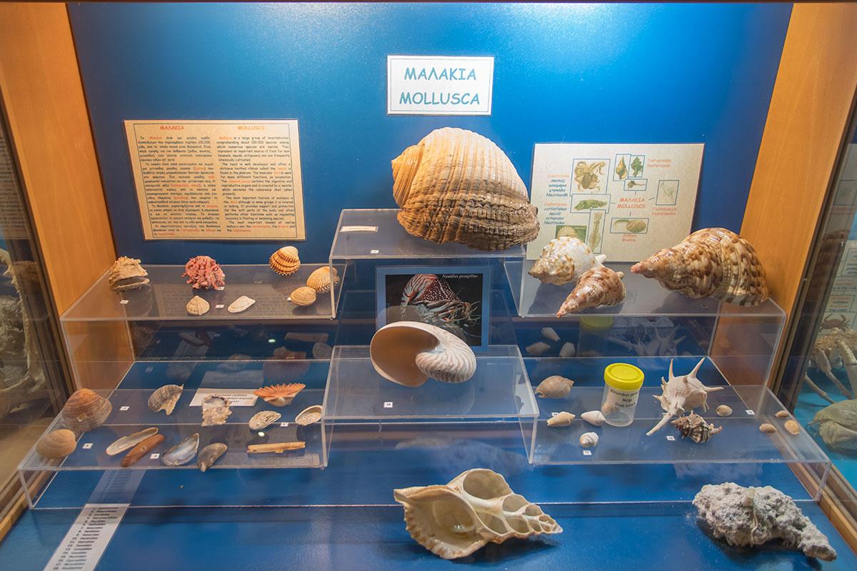 Разнообразные раковины моллюсков широко представлены в музейной экспозиции аквариума Родоса, удивляя даже бывалых путешественников.