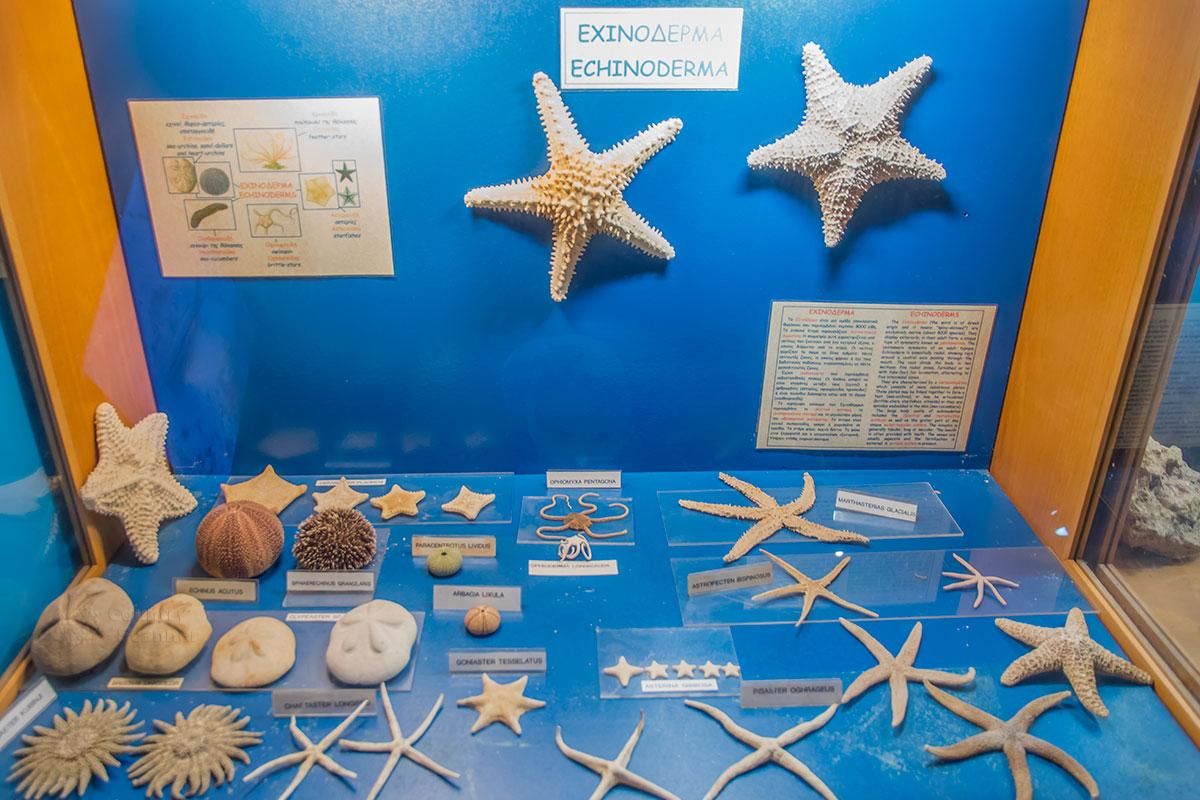 Собрание аквариума Родоса демонстрирует морских ежей и лилий, голотурий и многочисленные разновидности морских звезд.