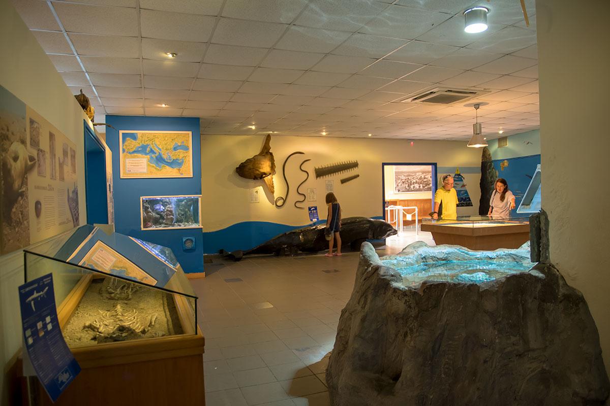 Вестибюль аквариума Родоса содержит обзорную информацию о Средиземноморье, а также ряд любопытных образцов морских обитателей.