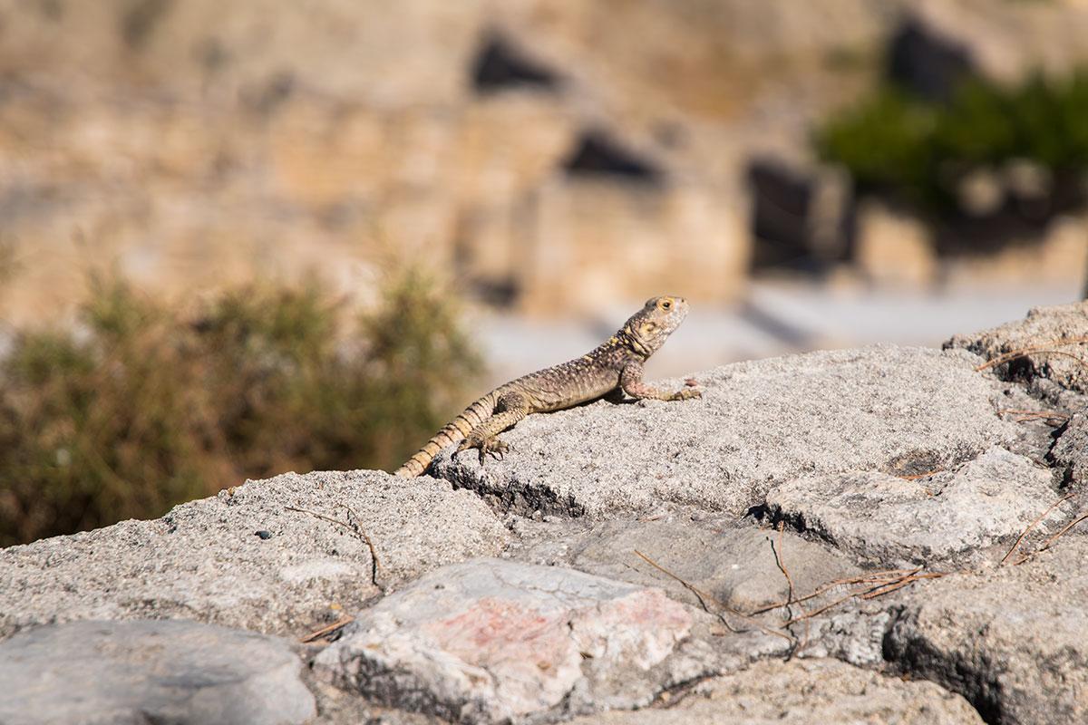 Развалины древнего Камироса предстают загадочными и необитаемыми, лишь изредка на территории можно заметить небольших ящериц.