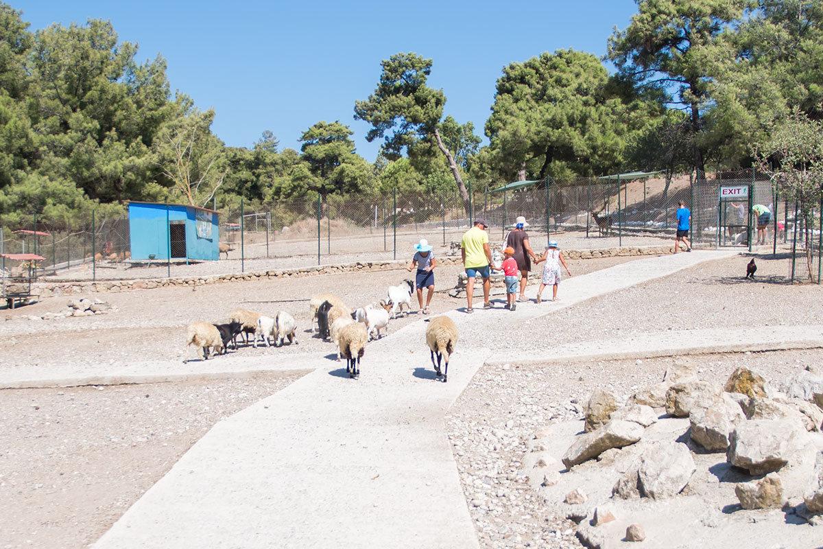 Общий вид контактного вольера страусиной фермы Родоса, неохотно покидающие его дети и увязавшиеся следом животные.