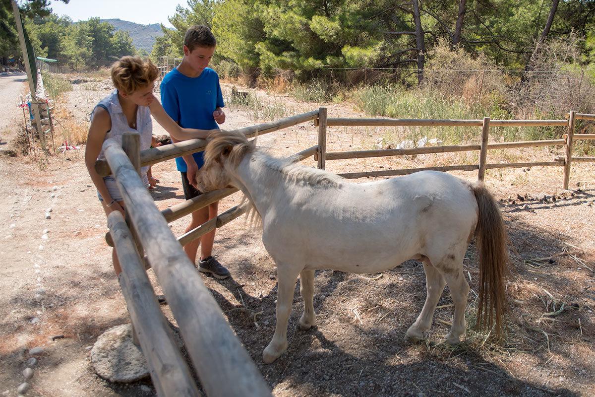 Уже в конце осмотра страусиной фермы Родоса путешественники встречают пони, лошадку низкорослой породы.