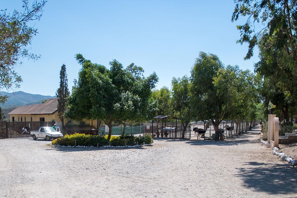 Демонстрационные вольеры для животных страусиной фермы Родоса, размещенные вдоль прямолинейной дорожки вперемешку с деревьями, напоминают парк.