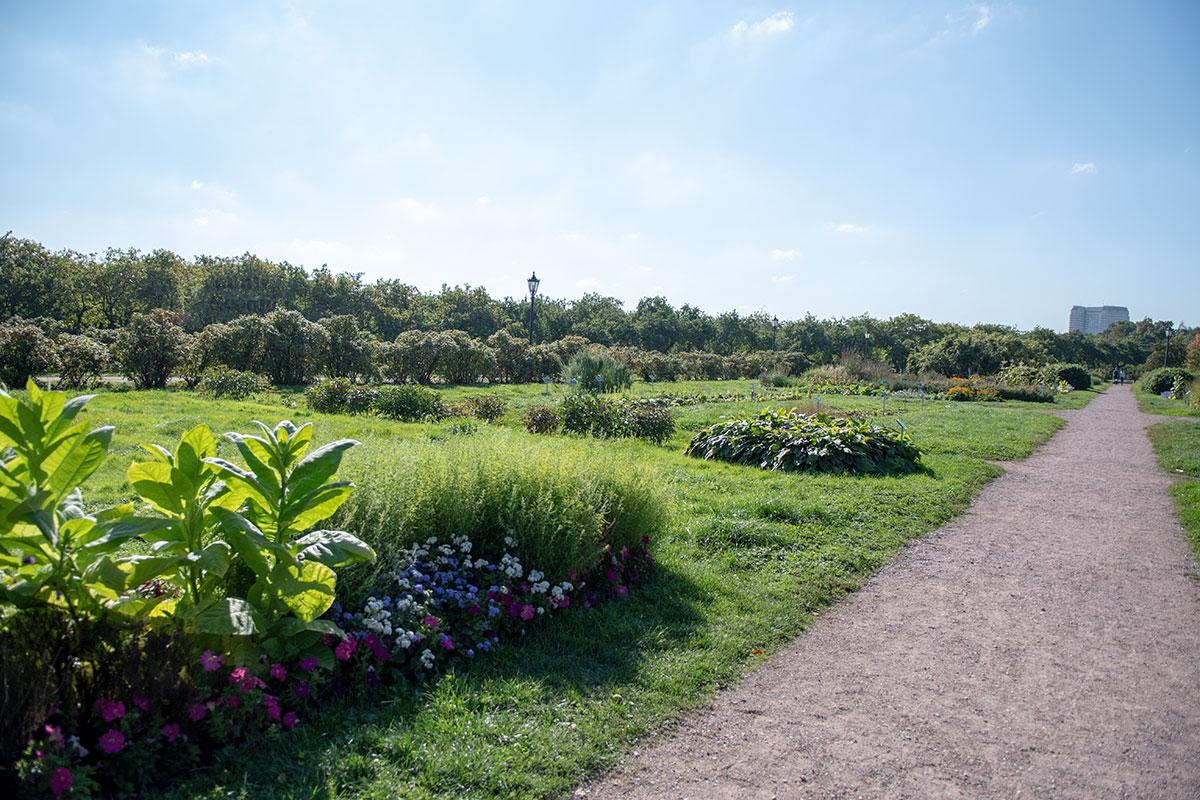 Формирование растительности в группы Аптекарский огород в Коломенском проводил с учетом биологической совместимости, учитывая и декоративность.