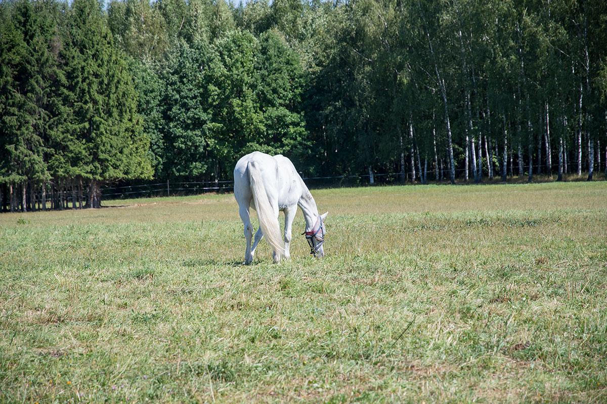 Случайно встреченная на пути из музея Ленина пасущаяся лошадь пробудила познания обозревателя в зодиакальной символике.
