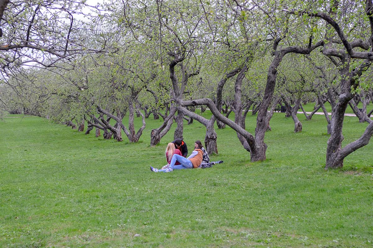 Самые нетерпеливые любители живой природы появляются на траве яблоневого сада в Коломенском одновременно с молодыми листочками.