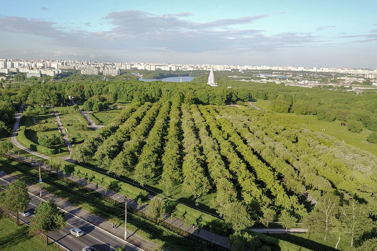 Обширный яблоневый сад в Коломенском, расположенный южнее храма Вознесения, - один из трех, сохранившихся в музее-заповеднике.