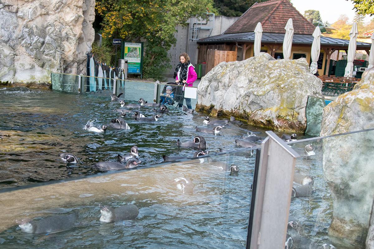 Бассейн с морскими млекопитающими в зоопарке Шенбрунна вызывает повышенный зрительский интерес и оформлением, и обитателями.
