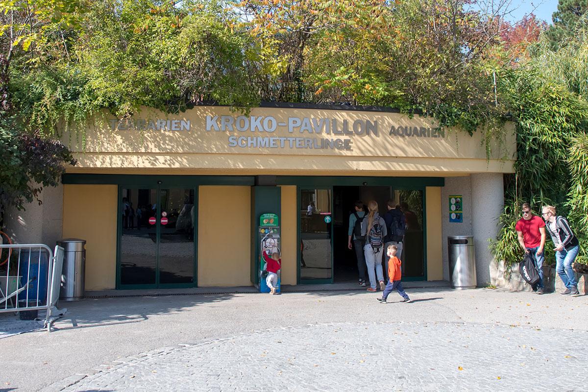 Отдельный павильон зоопарк Шенбрунна выделил для теплолюбивых существ, разместив под одной крышей террариум, аквариум и многочисленных бабочек.