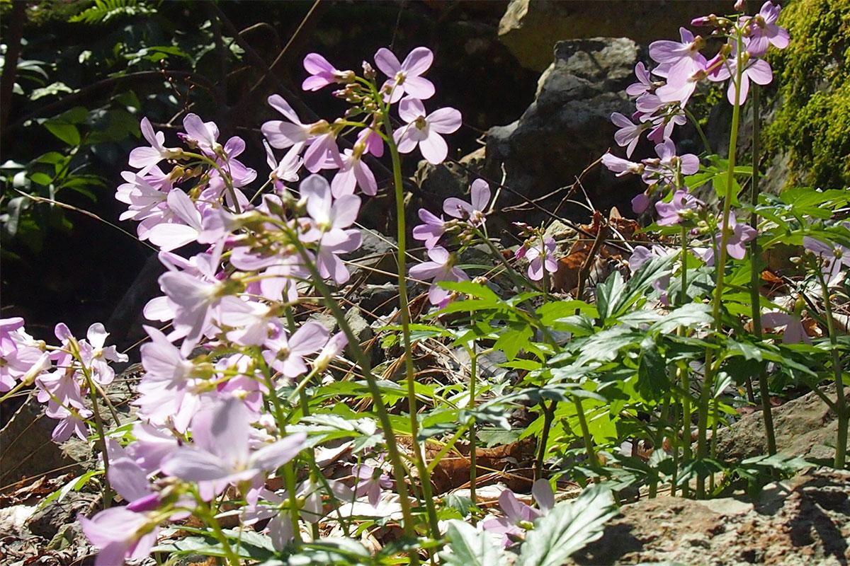 Флора в районе расположения сочинских Агурских водопадов не отличается изобилием и разнообразием цветущих растений, но встречаются редкие виды.