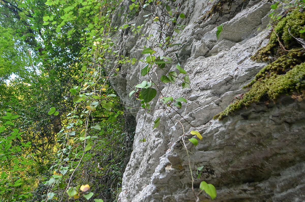 Прорубленные скалы на пути к Агурским водопадам состоят из известняковой горной породы, склонной к расслаиванию и подверженной эрозии.