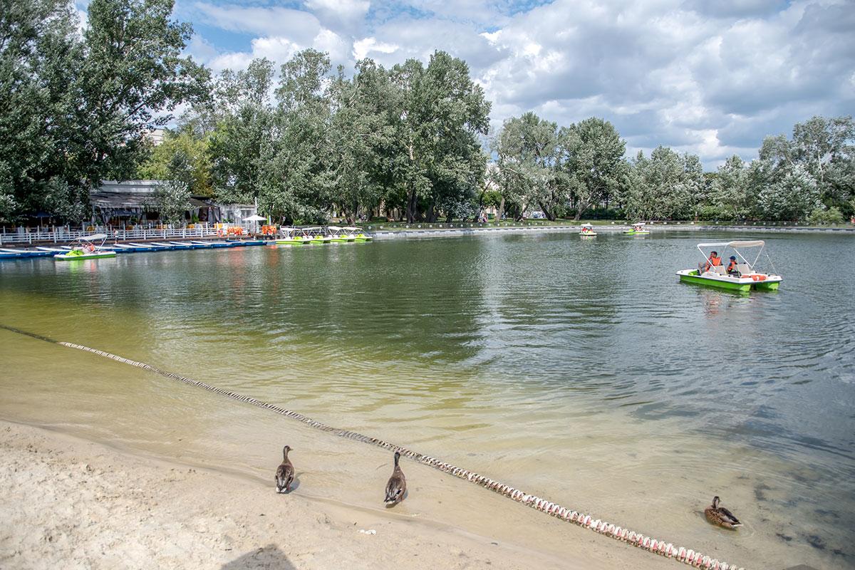 Пионерский пруд в Парке Горького невелик по размерам акватории, но имеет пункт проката катамаранов и гребных лодок для желающих.