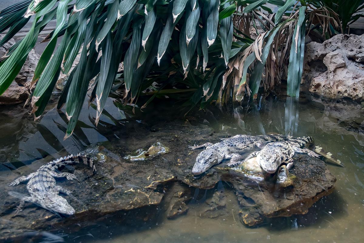 Земноводным в террариуме пекинского зоопарка воссозданы практически природные условия обитания, плюс они здесь в безопасности.
