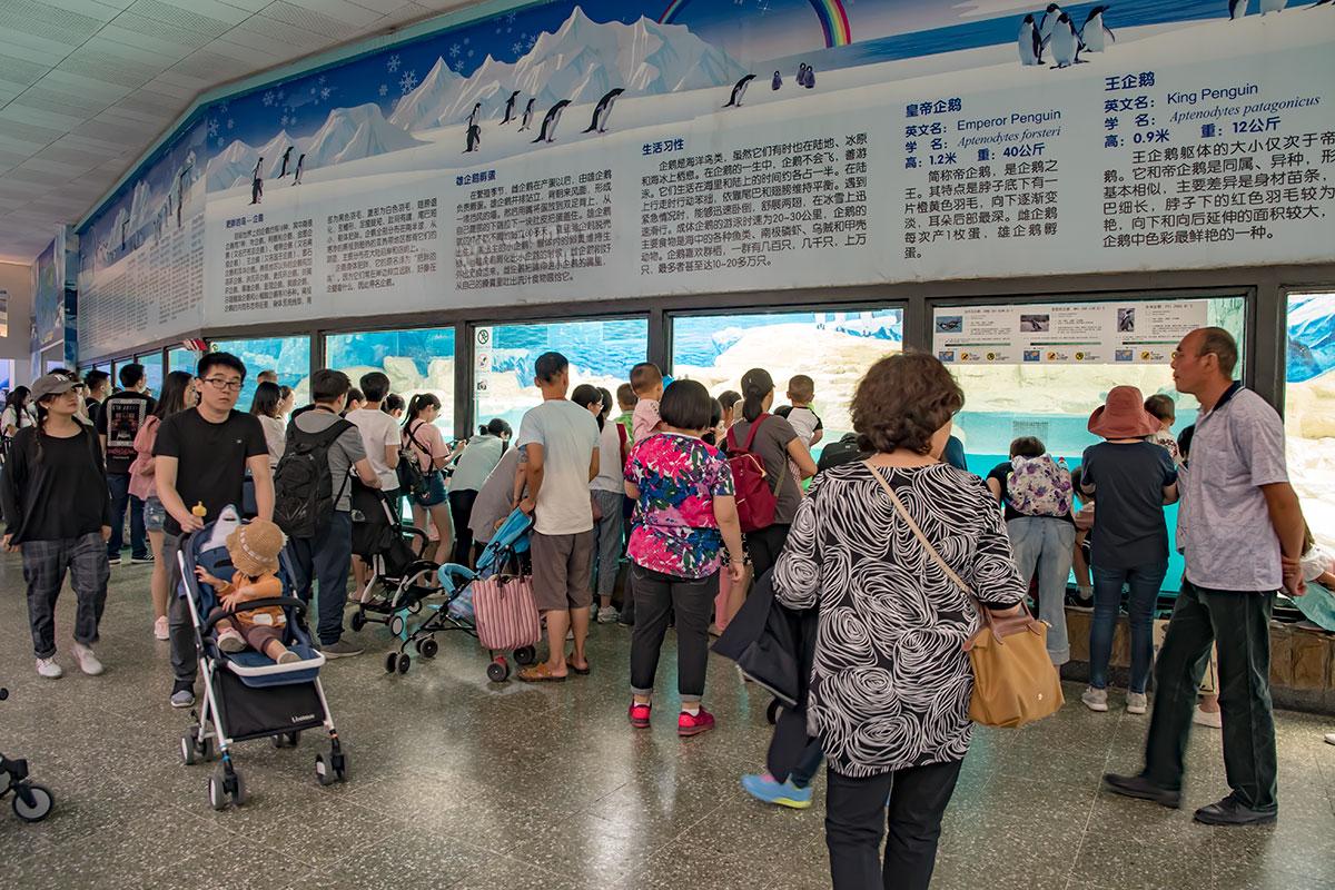 Одним из самых популярных и посещаемых павильонов пекинского зоопарка считается пингвинарий, за вход необходима дополнительная оплата.