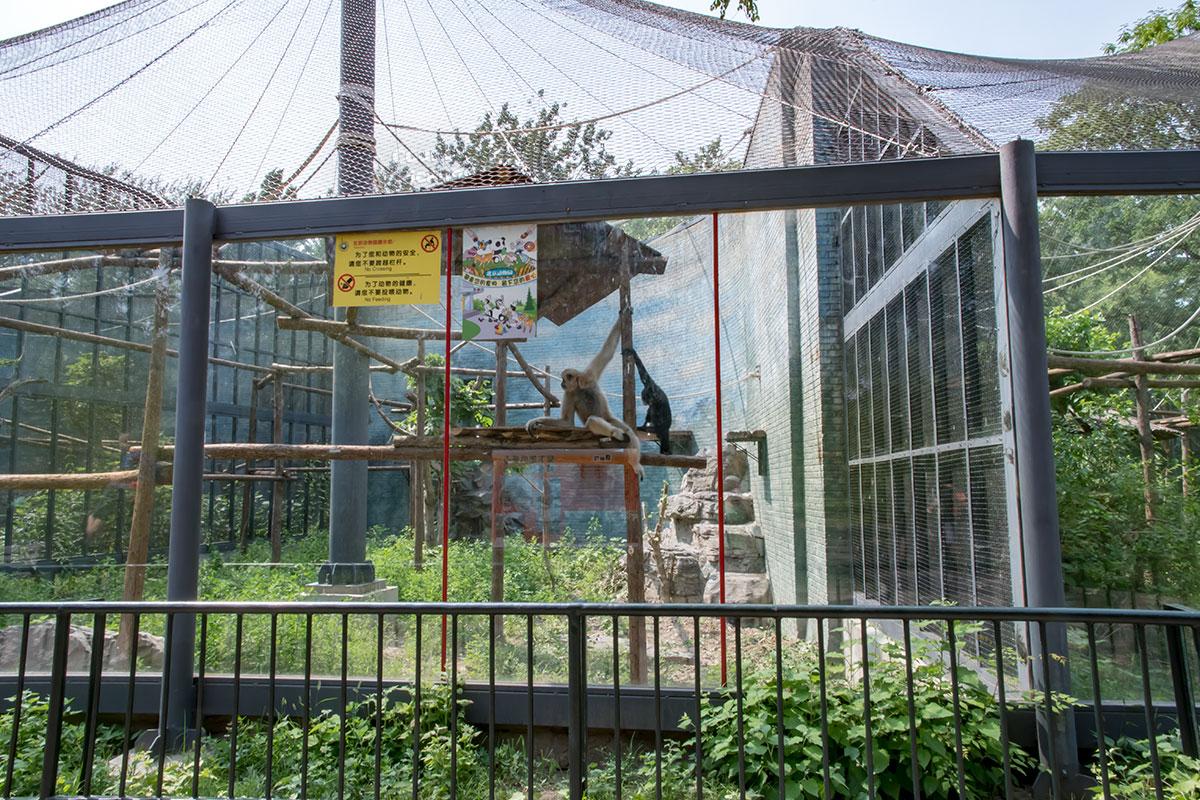 Обезьяний павильон пекинского зоопарка достаточно просторен для имеющейся численности приматов, обеспечивает развлечения и не допускает бегства.