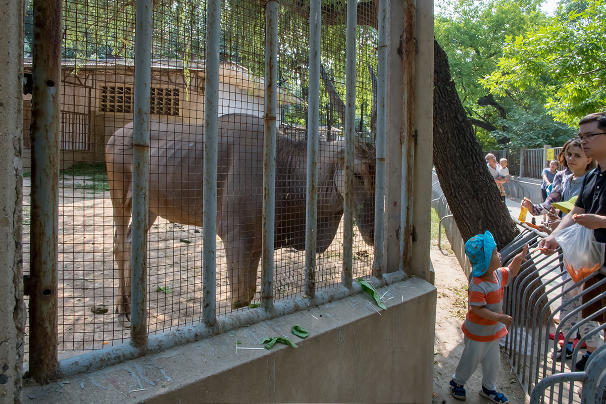 Не всегда посетители пекинского зоопарка действуют корректно, на фото родитель неправомерно перенес ребенка за заградительный барьер.