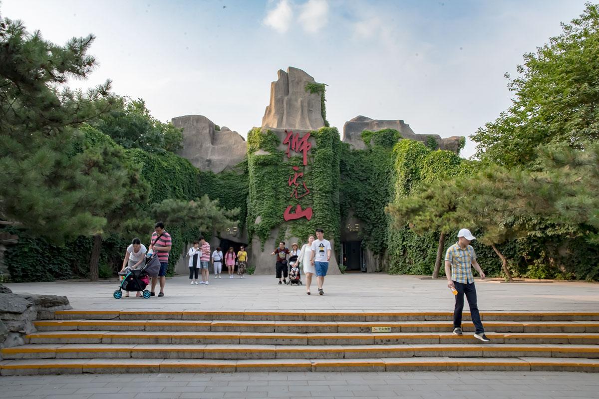 Декорированный под заросшую лианами скалу Холм львов и тигров пекинского зоопарка скрывает павильон кошачьих с разнообразными обитателями.