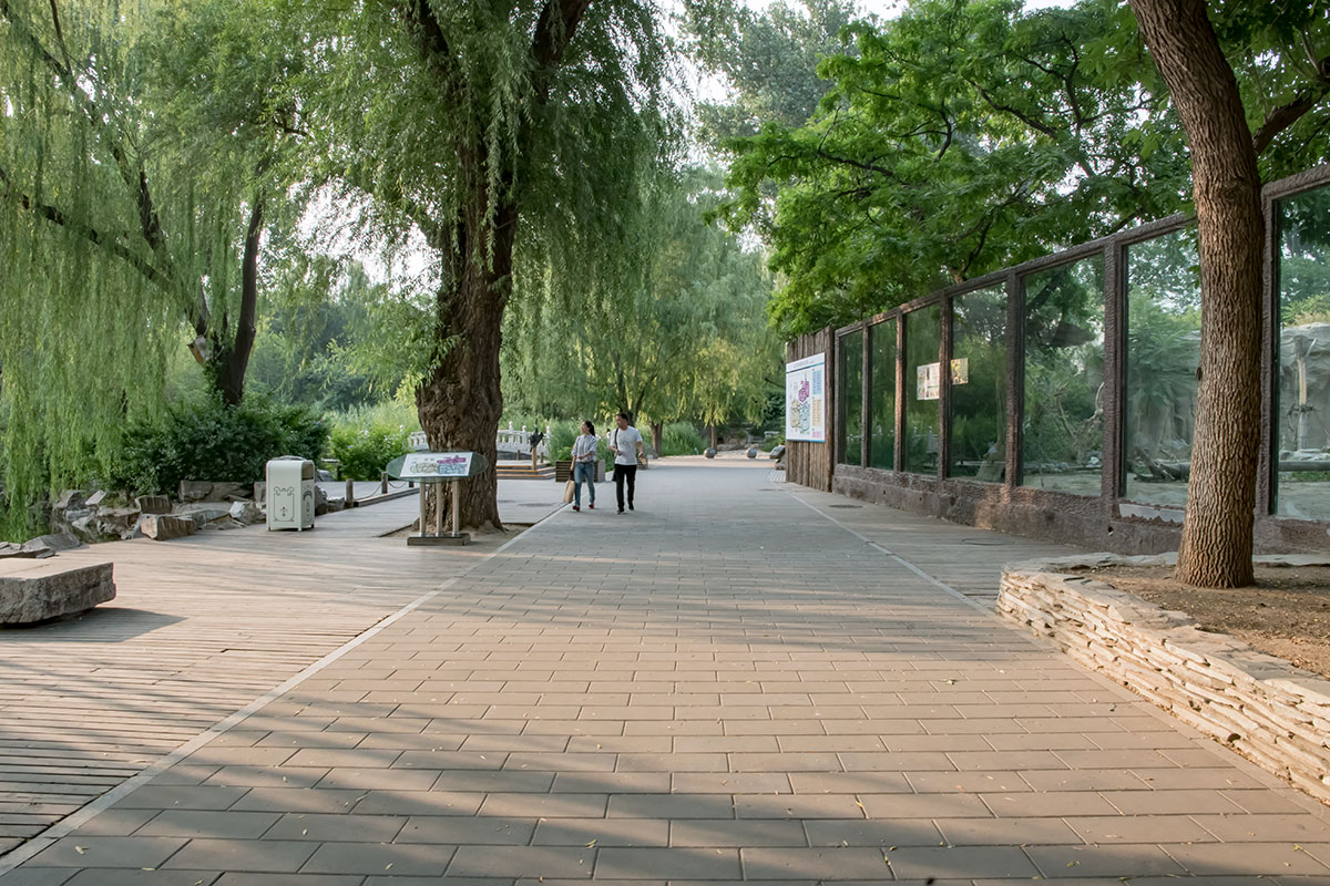 Особенной живописностью отличается аллея пекинского зоопарка, проходящая вдоль русла пересекающего территорию канала.
