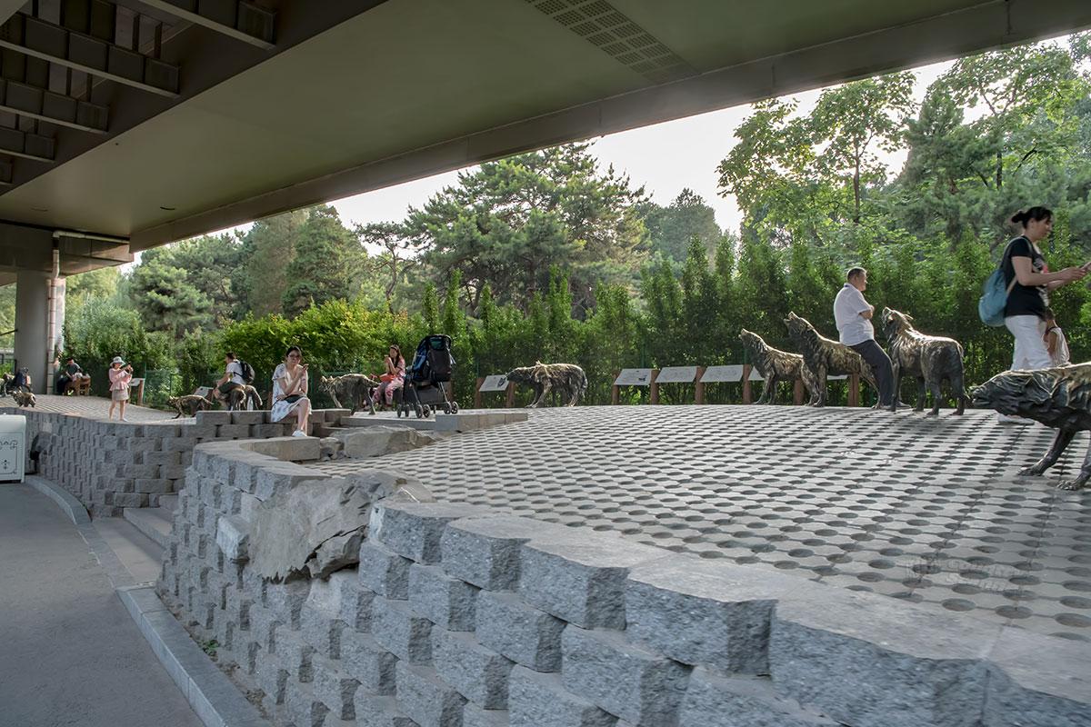Стая бронзовых волков вблизи выхода из пекинского зоопарка – популярнейшее место отдыха завершивших его посещение туристов.