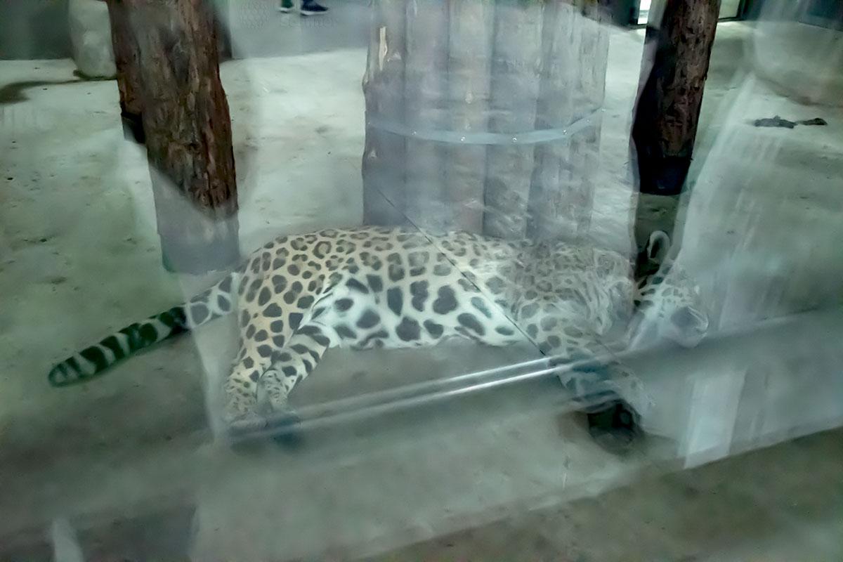 Демонстрируя своих обитателей, пекинский зоопарк не в силах обеспечить их позирование перед массой фотографов.