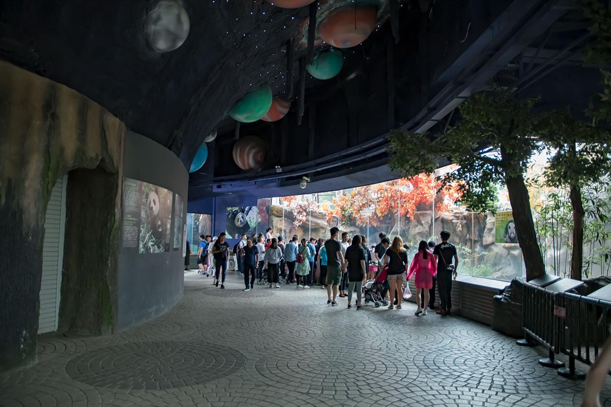 Доплата в пекинском зоопарке предусмотрена за посещение павильона больших панд, предназначенного для их зимнего размещения.