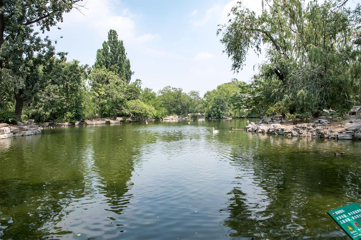 Значительно разнообразят растительные ландшафты пекинского зоопарка многочисленные пруды и протоки, оформленные на его территории.