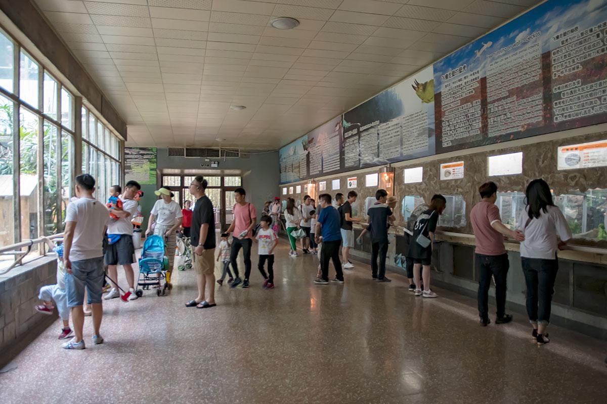 Террариумы пекинского зоопарка содержат на плакатах обилие информационных сведений, но написанных исключительно иероглифами.