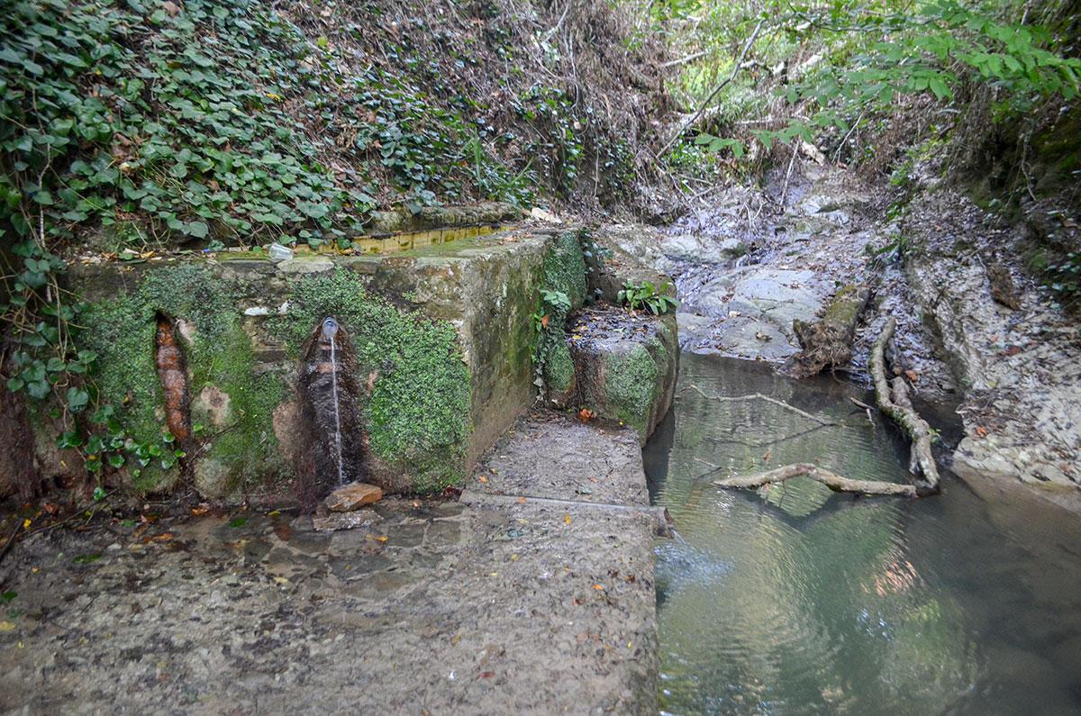 Обильная зелень даже на безжизненном бетоне убедительно доказывает, что Агурские сероводородные источники источают воду живую.