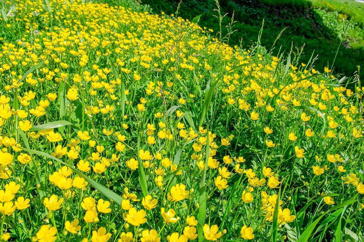 Сохранение травяного газона с дикими цветами, местами заполонившими откосы возле церкви Параскевы Пятницы на Торгу, нельзя считать сбережением наследия.