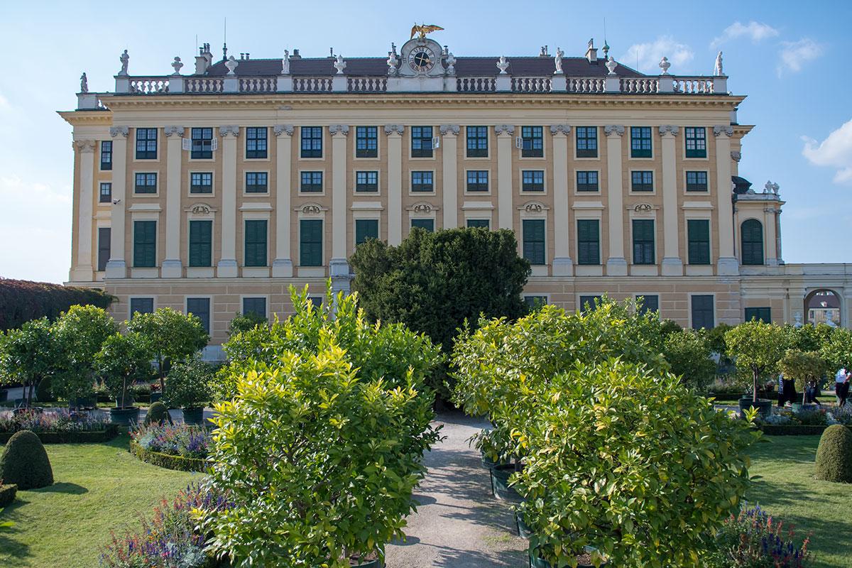 Перед восточным корпусом Шенбруннского дворца, на территории Кронпринценгартен, на лето разбивается цитрусовый сад с деревьями в контейнерах.