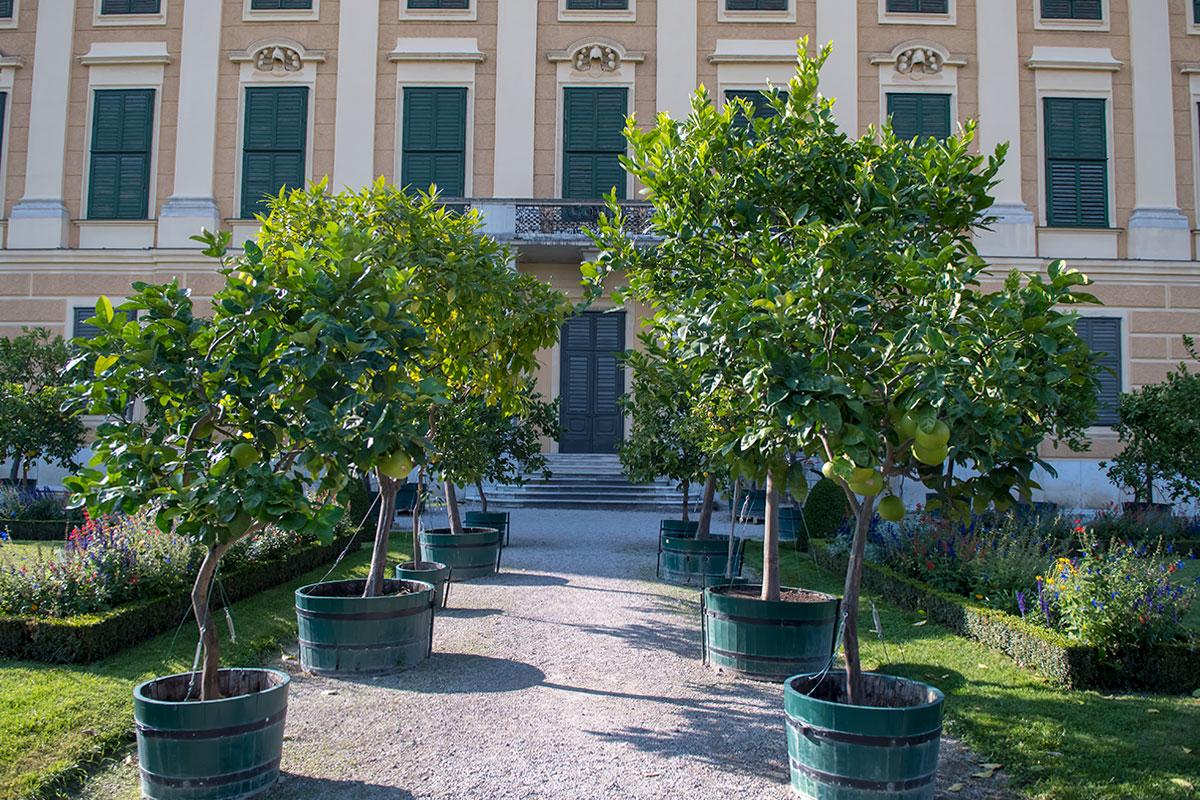 Одна из главных достопримечательностей Кронпринценгартен, но исключительно летняя, - сад цитрусовых в деревянных бочках, зимующих в оранжерее.
