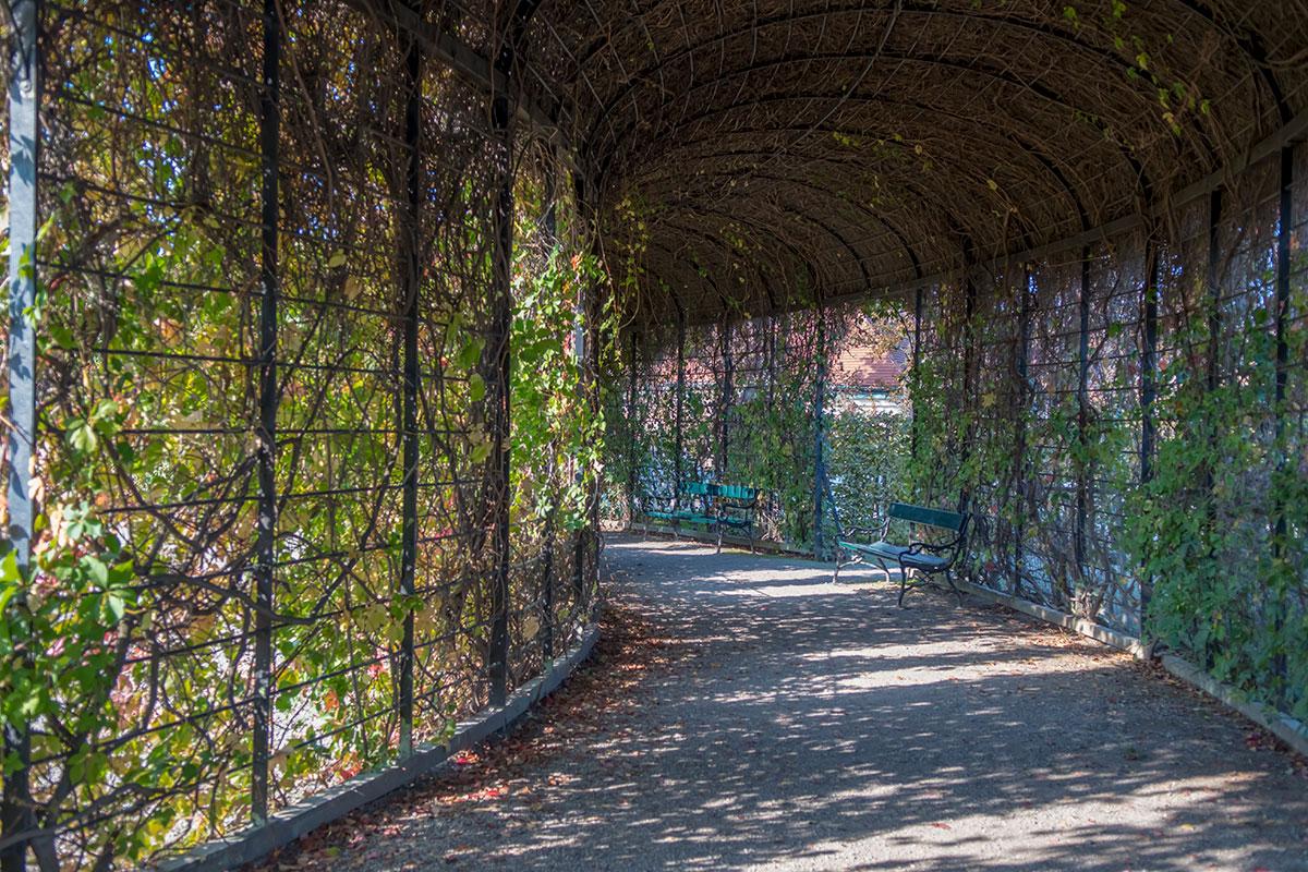 Устройство декоративного паркового элемента Кронпринценгартен, называемого перголой, лучше всего рассматривать изнутри этого сооружения.