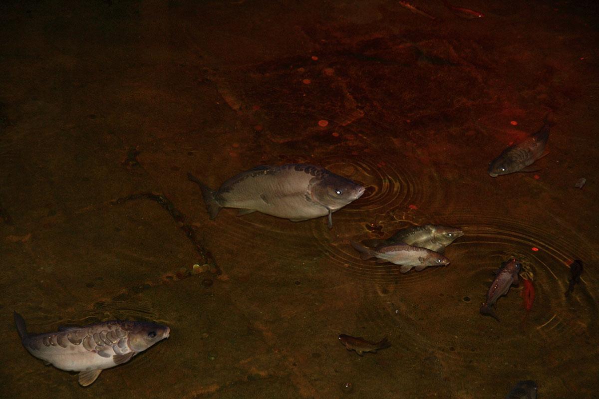 Дно огромного бассейна водохранилища Цистерна Базилика усеяно туристическими монетами, на поверхность всплывают живущие здесь зеркальные карпы.