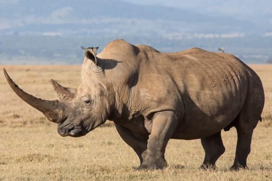 носорог в картинках прошли успешно