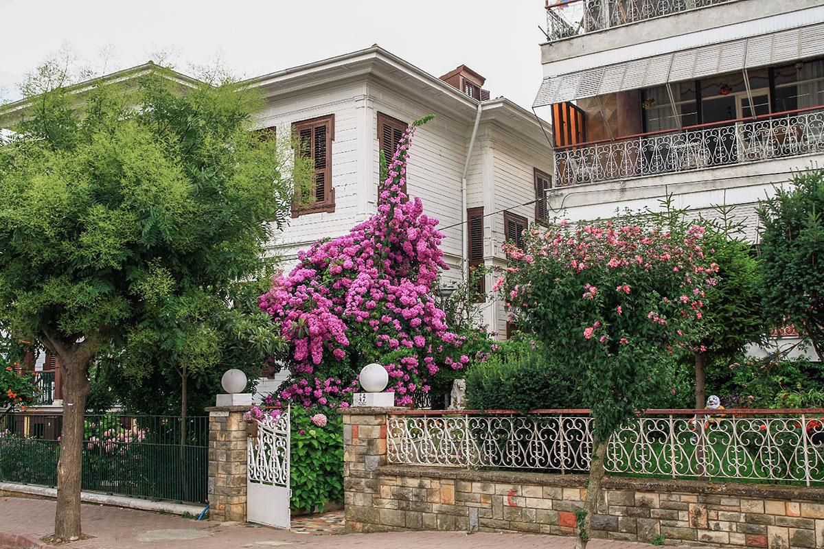 Благодатный климат, которым славятся Принцевы острова, позволяет все дачные постройки превращать в живописное сочетание архитектуры и растительности.